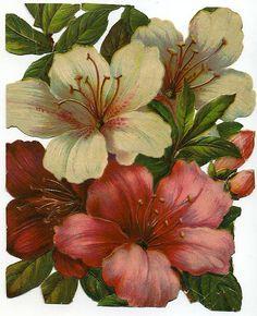 Victorian Scrap Azalea Flowers c. 1900