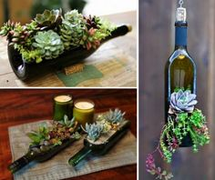 Succulent Wine Bottles. Tips on How to Cut a Wine Bottle, Because You Know Why (thewhoot.com.au/)