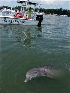 Hang out with Dolphins