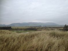 Criffel from the sand dunes near Southerness golf course, Dumfries and Galloway. Jan 2016. B.