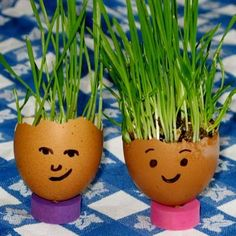 Fun for kids. These are chives in eggshells