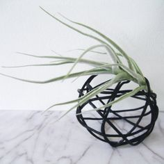 Make this quirky string ball with simple materials, as a mounting idea for an Air Plant.