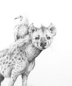 Drawing Realistic Skin Adonna Khare, Hyena, carbon pencil on paper Animal Sketches, Animal Drawings, Art Sketches, Art Drawings, Amazing Drawings, Amazing Art, Hyena Tattoo, Petit Tattoo, African Wild Dog