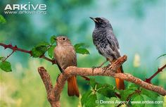 Vtáky Slovenska: júla 2014