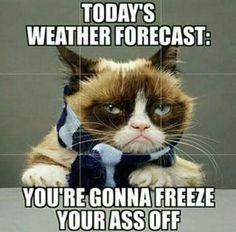 Funny memes sarcastic truths hilarious grumpy cat ideas for 2019 Grumpy Cat Quotes, Funny Grumpy Cat Memes, Funny Animal Memes, Cute Funny Animals, Funny Animal Pictures, Funny Cats, Funny Memes, Funniest Animals, Humorous Cats