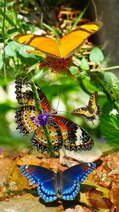 Gorgeous specimens of God's glory Beautiful Bugs, Beautiful Butterflies, Beautiful Flowers, Beautiful Creatures, Animals Beautiful, Cute Animals, Dragonfly Art, Butterfly Wings, Butterfly Food