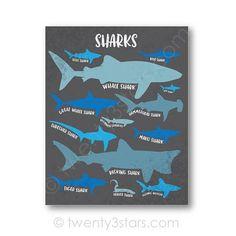 Shark Nursery, Shark Room, Ocean Themed Nursery, Ocean Bedroom Kids, Ocean Room, Shark Bathroom, Boy Room, Kids Room, Shark Gifts