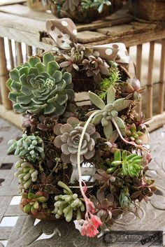 Step by step tutorial for making your own succulent wreaths (uses an alphabet wire form to make monogrammed wreaths)