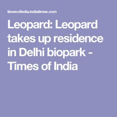 Leopard: Leopard takes up residence in Delhi biopark - Times of India