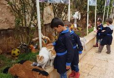 A visit to the House of Cats  #thecatmanofaleppo #syriancats #Syrianchildren Syrian Children, Childhood, Cats, House, Infancy, Gatos, Home, Cat, Kitty