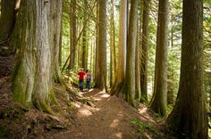 Ancient Cedars hiking trail near Whistler resort. Hiking Gear, Hiking Trails, Best Hikes, Whistler, Bouldering, British Columbia, The Great Outdoors, Tourism, Places To Go