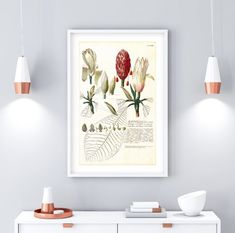 Fruit Illustration, Botanical Illustration, Botanical Prints, Floral Prints, Herb Wall, Nature Posters, International Paper Sizes, Printable Wall Art, Magnolia