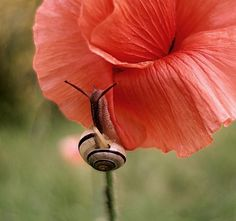 *macro photo of a snail