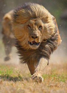 I did not start running soon enouuuuuuuuuuuuuuuuuuuuuuuuuuuuuuuuuuuuuuuuuuuuuuuuuuuuuuuuuuuuuuuuuuuuuuuuuuuuuugh!!!!!!!!!!!!!!!!!!!!!!!!!!!!!!!!!!