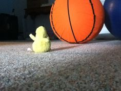 Ducky Mo Mo is lonely and stop in it's track! AHHH hahaha;) great picture that I took btw:) hehe