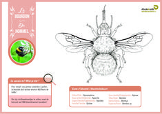 """Bring some colour into your life with these scientifically sound colouring pages! 🎨🦋 For both kids and adults 😊   Did you know that drawings are often used in entomology (""""insect-ology"""")? Some physical characters are not always clearly visible on a photo. With the help of drawings, we can get a better idea of the shape and structure of the animal or characteristic being examined 🤓 Colouring Pages, Did You Know, The Help, Bring It On, Photo And Video, Museum, Characters, Shape, Animal"""