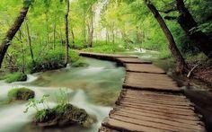 Inspiração Fotográfica: Florestas Mágicas!