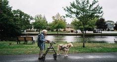 92-Year-Old WWII Veteran Finds Solace in Yellow Lab Service Dog http://www.wideopenpets.com/92-year-old-wwii-veteran-finds-solace-in-yellow-lab-service-dog/