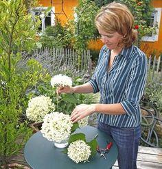 Schneeballhortensie als Vasenschmuck
