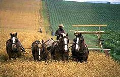 The Amish require that all equipment use horses for locomotion.