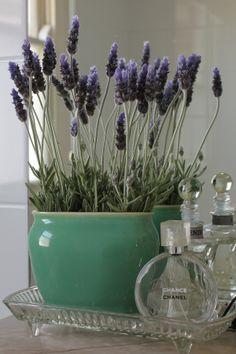 Put lavender in the bathroom