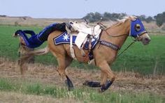 trick riding - Google Search