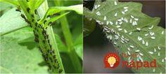 3 Plant Leaves, Herbs, Plants, Gardening, Garten, Herb, Flora, Plant, Lawn And Garden