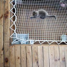 Chat déco / Cute / Filet dans un loft @jesussauvage