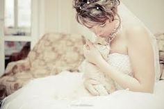 #cats at #weddings - Google Search