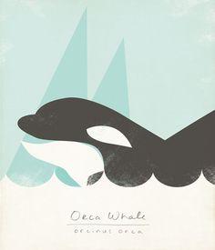 Orca Illustration Limited Edition Giclee Print by ShopAmySullivan, $25.00