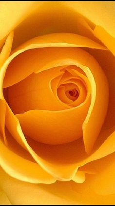 Eye of a Rose -  a yellow rose...Will eternally remind me of my mother...Lord, how I miss her......