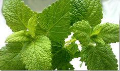 Citromfű gyógyhatása | Herb Caps | kapszulába zárt egészség Health And Beauty, Plant Leaves, Plants, Plant, Planets