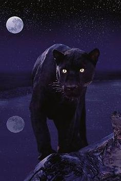 How would you like to run into this one night? beautiful, but SCARY!
