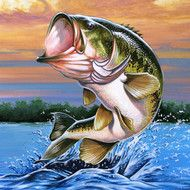 Largemouth Bass Facts, Information, and Photos Bass Fishing Pictures, Bass Fishing Videos, Bass Fishing Lures, Trout Fishing, Fly Fishing, Fishing Boats, Fishing Trips, Fishing Tackle, Deep Fishing