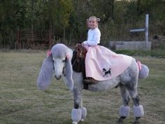Only a little girl in LOVE with her horse could come up with this funny costume!