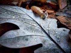 Für was in der Natur warst du diese Woche dankbar?  #Dankbarkeit #52Wochendankbarkeit #Wochenchallenge Plant Leaves, Plants, Grateful Heart, Nature, Plant, Planets