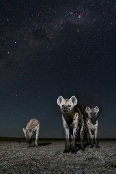 Spirits of the Night by Will Burrard-Lucas