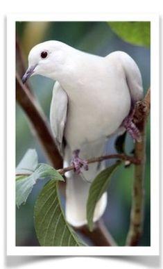 flying of pigeon Pretty Birds, Love Birds, Beautiful Birds, Animals Beautiful, Exotic Birds, Colorful Birds, Animals And Pets, Cute Animals, White Doves