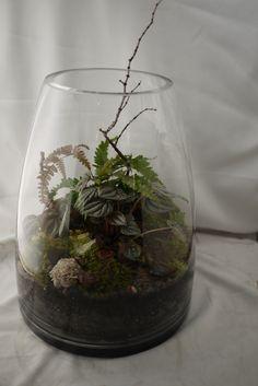 TERRARIUMS | Sprout Home