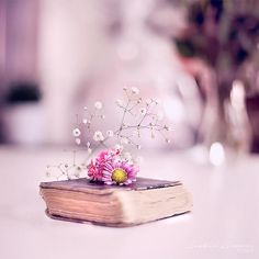 Wisdom by Healzo on DeviantArt Miniature Photography, Cute Photography, Still Life Photography, Creative Photography, Flower Wallpaper, Nature Wallpaper, Wallpaper Backgrounds, Love Images, Beautiful Pictures
