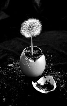 This image is of a plant growing out of an egg symbolising life. This photo has…