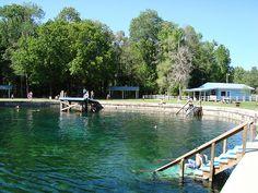 florida natural springs - bronson blue springs
