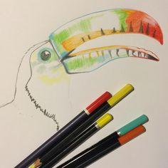 The bones of a new feathered friend   #sketch #sketchbook #illustration #pencildrawing #drawing #art #toucan #bird #partybird #beak #colourful #birdnerd #birdsketch #birdillustration #birdart #toucanlove #brisbaneartist #brisbanebased #love #bright #prettybird