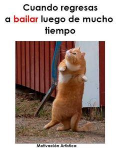 Bts Memes, Funny Memes, Dance Motivation, Dancer Problems, Ig Captions, Dance Quotes, Caption Quotes, Just Dance, Ballet Dance