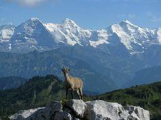 Eiger, Mönch, Jungfrau suisse alps
