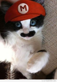 Super Mario Cat ! RIP Bob Hoskins...