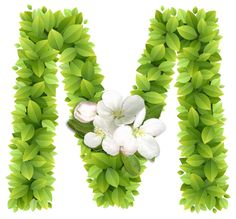 Abecedario con Hojas Verdes y Flores Blancas. Alphabet with Green Leaves and White Flowers. Alphabet Letters Design, Alphabet Writing, Alphabet Art, Alphabet And Numbers, Flower Letters, Flower Names, My Flower, Alphabet Wallpaper, Name Wallpaper