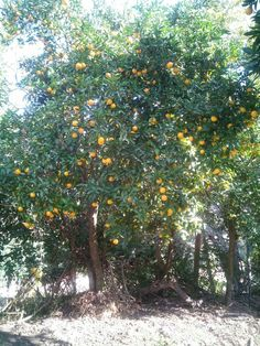 Fruits, Orange.