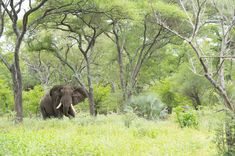 Photograph by Ross Couper Wildlife Safari, Remote, Elephant, Photograph, Landscape, House, Outdoor, Beautiful, Photography