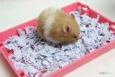 Make Hamster Bedding Similar to Carefresh.